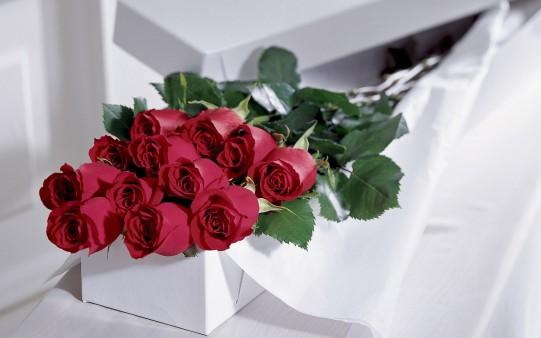 Rosas para San Valentín 2013