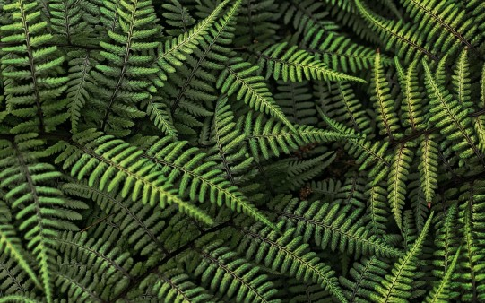 Textura Vegetal Helechos