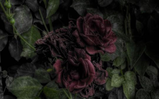 Fondo Rosas Antiguas