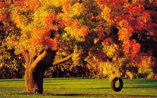 Fondo árbol con Columpio