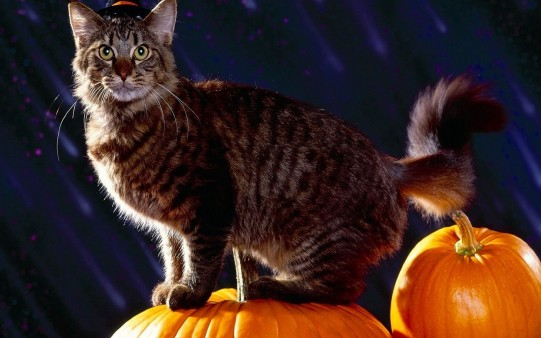 Wallpaper Gato Halloween