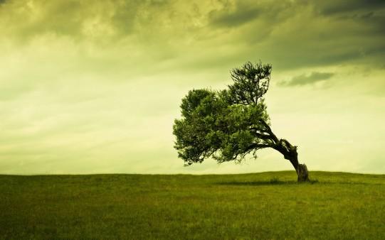 Fondo Árbol Inclinado