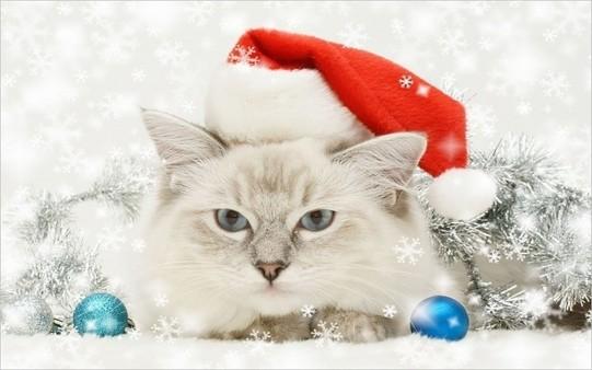 Gato que odia Navidad