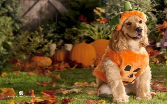 Fondo Pantalla Halloween. Perro disfrazado